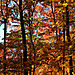 Colorful_autumn_leaves_3066