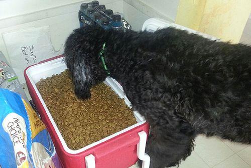 Who Needs A Dog Bowl 4839