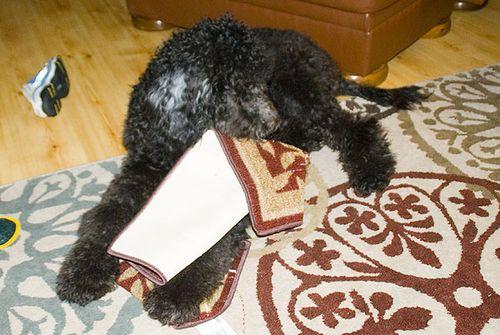 Who Needs Doggie Toys 2902
