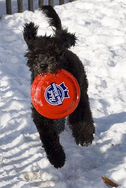 Say Dad Toss Me The PBR Frisbee Again 1047