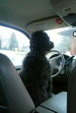 Who Says That Dogs Cannot Drive 2636