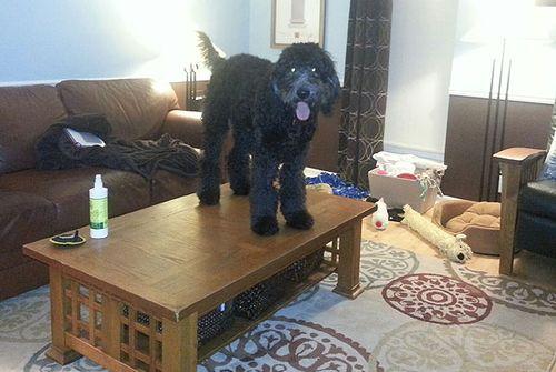 Coffee Table Doggie 4654