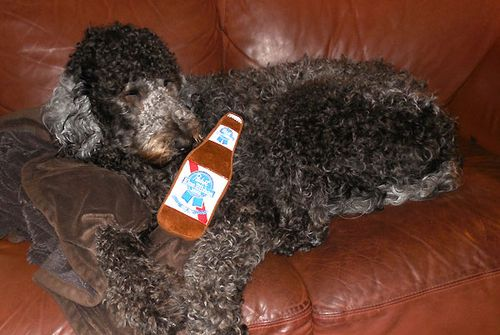Thanks Dad For The Pabst Doggie Toy 4446