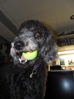 I Love Tennis Balls 3547