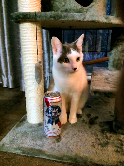 Wilson The Cat Relaxes With A Pabst Tall Boy After Work 8148