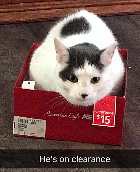 Clearance Sale One Cat 15 3438