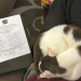 Hard To Get Paperwork Done With The Lap Cat