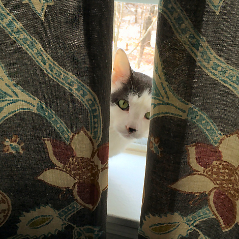 Wilson The Cat Peek-a-Boo 8970