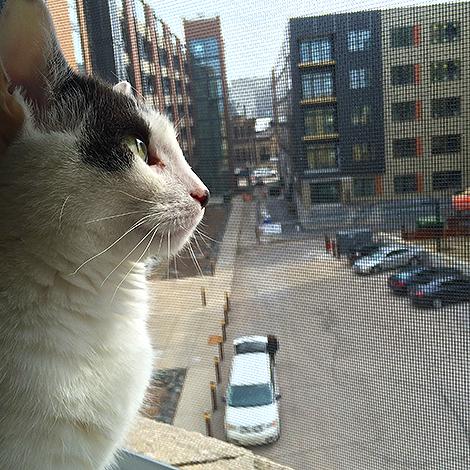 Wilson the Neighborhood Watch Commander in Chief 0024