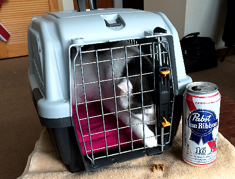 Tough Choice for Wilson The Cat Treats Or Pabst Tall Boy 8345