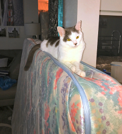 Wilson Helps Mom Move 4421