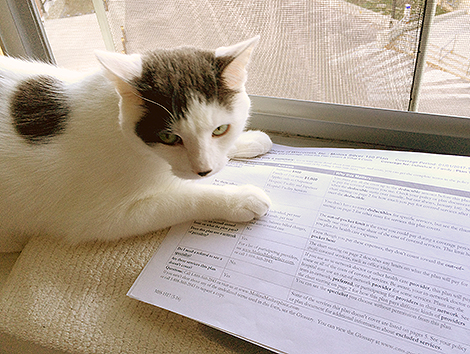 Wilson Reviews His New Health Insurance Plan 6365