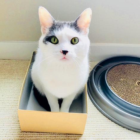 Found a Box Today Happy Caturday 6728