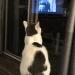 Wilson Watching TV Reflections
