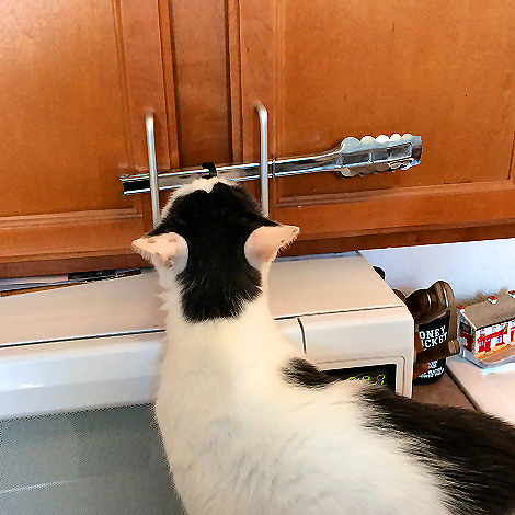 Grandpa Thinks This Fancy Lock Will Keep Me Out Of My Treat Cabinet 8459