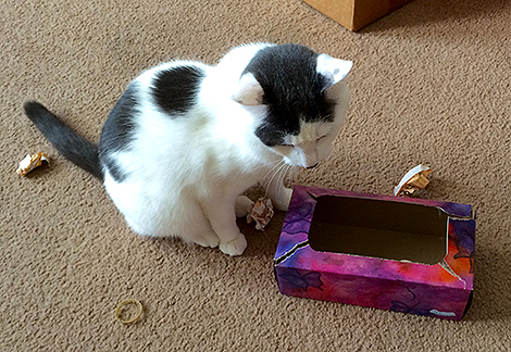Wilson and the Tissue Box 0001fb