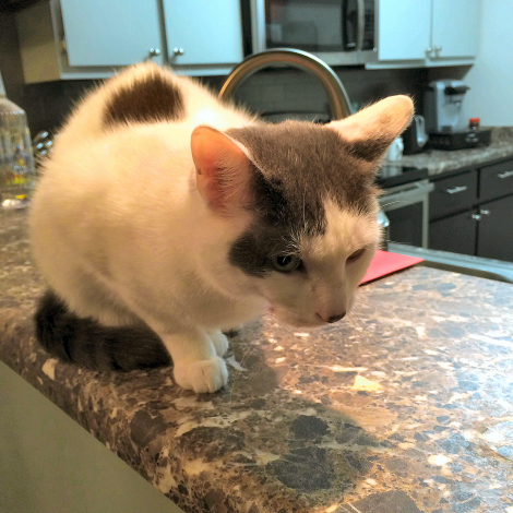 Wilson the Counter Surfing Cat 7126fb