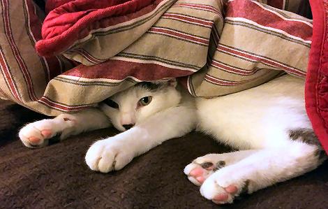 Happy World Cat Day 8353