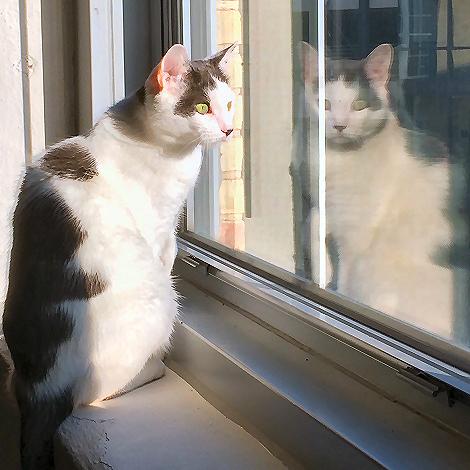 Heres Looking At You Kitty 0988fb