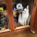Cupboard Cat