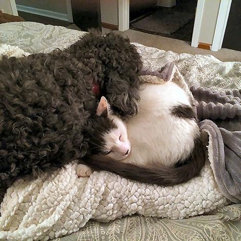 Cuddling 0737