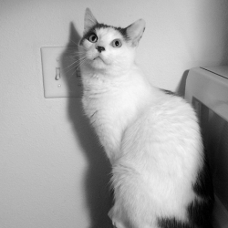 Mystery Cat 1195