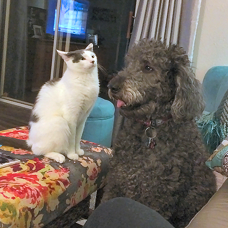 Dog and Cat Discussing Their Day at Work 7583