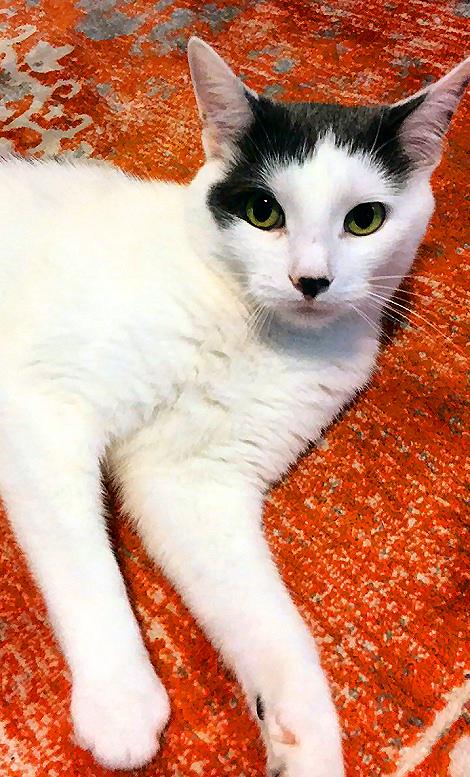 Meow IMG_3559fb