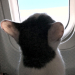 I'm Leavin' on a Jet Plane 3925