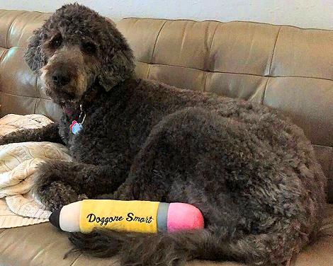 Doggone Smart Dog 4935fb