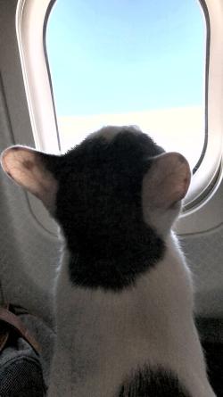Im leavin on a jet plane 3925fb