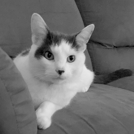 Couch Cat 4429fb