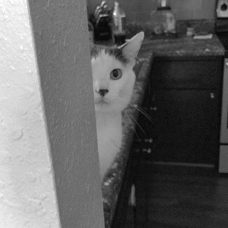 Just Peeking 6559fb