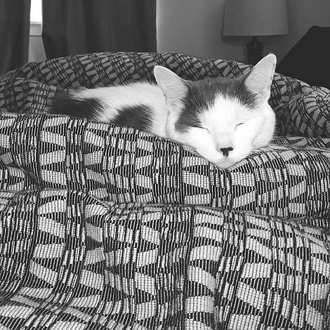 Cat-Nappin 8997fb