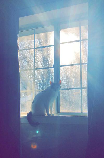 Mystical Cat 9111