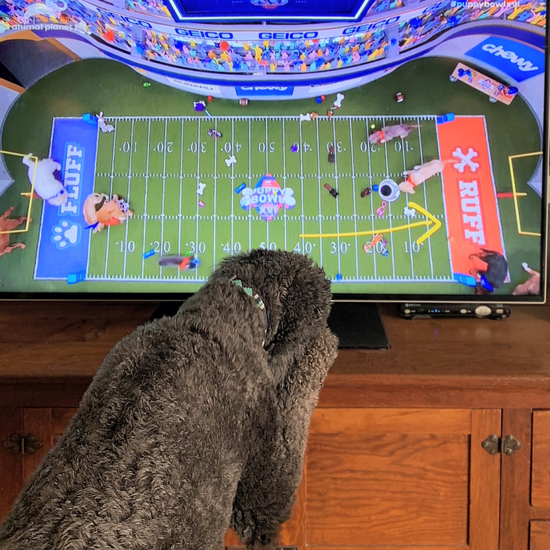 Anchor Watches The Puppy Bowl 0925p
