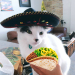 Happy Cinco de Meow to my #furfriends
