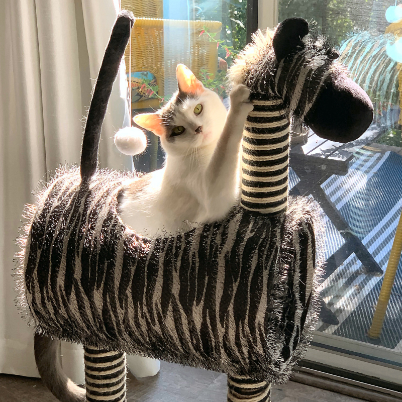 Wilson Mr Zebra IMG_4247p
