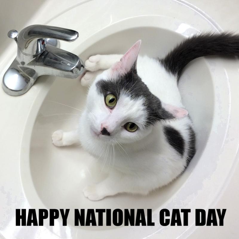 Wilson Happy National Cat Day IMG_6045p