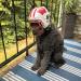 Gee Dad, thanks for the goofy helmet, ha ha, but Go Badgers Go