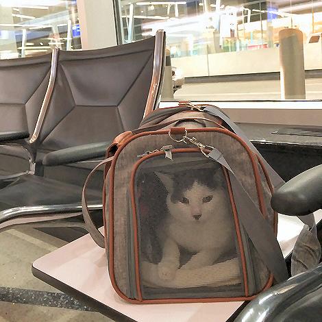 Cat in a Bag. Welcome Home #WilsonTheCat.
