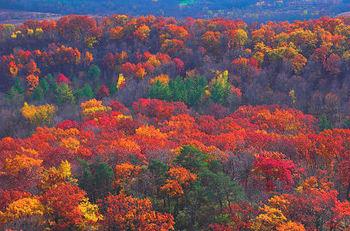 Autumn_glow_3146