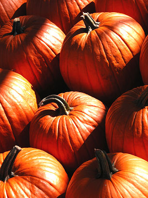 Pumpkin_shadows_2423