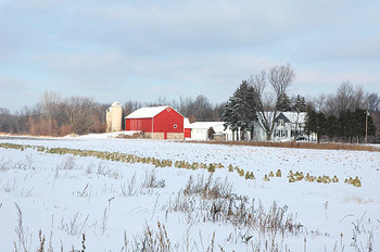 Snowy_fields_4682