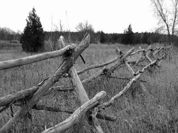 Stick_fence_7353