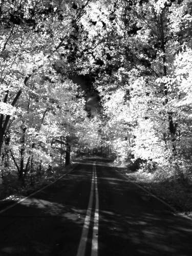 Autumn_road_3463