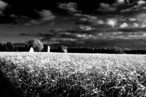 Country_sunset_3592