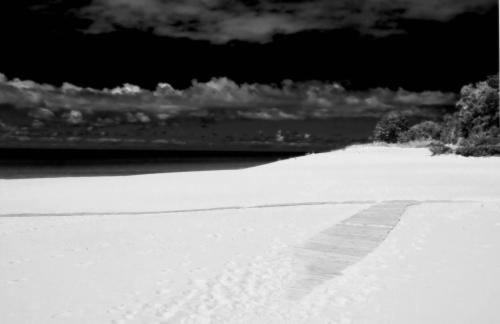 Sandy_boardwalk_0065