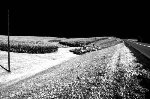 Summer_crops_5364