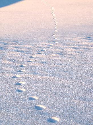 Animal_tracks_7826
